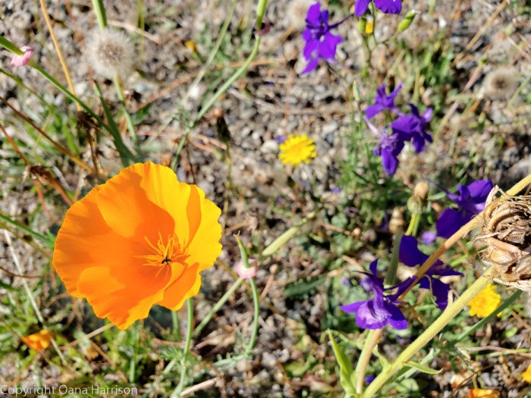 Elwha-Dam-RV-Park-Colorful-Flowers-14