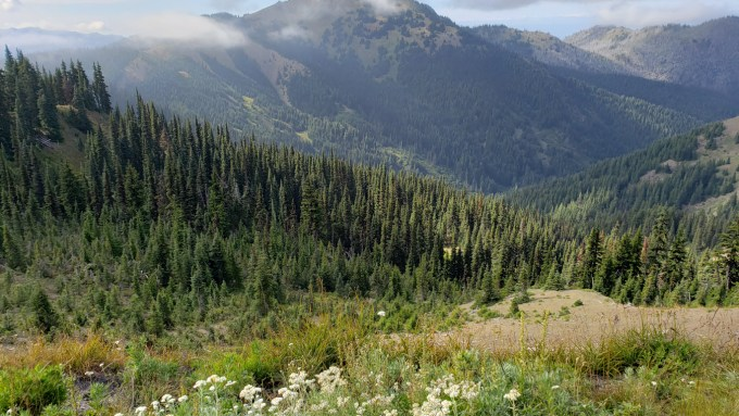 Hurricane-Ridge-WA