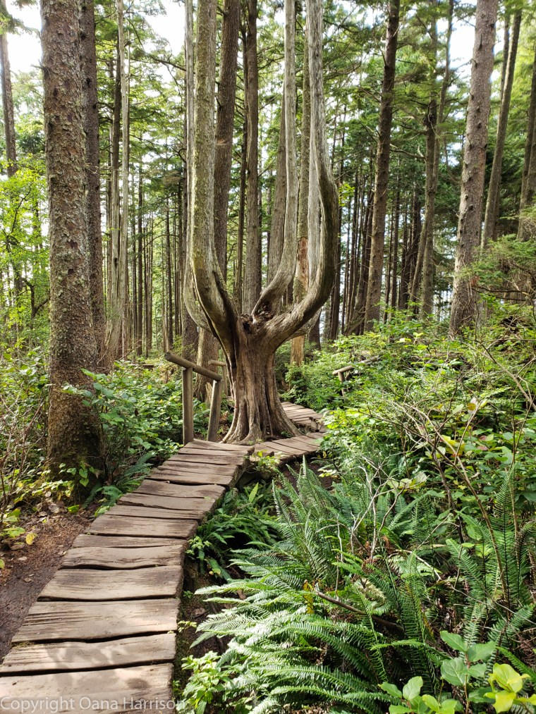 Forest-walk-to-Cape-Flattery
