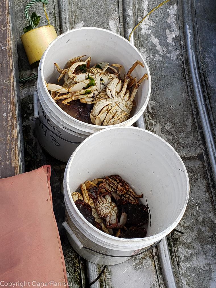 Netarts-Bay-OR-Crabbing-10-two-crab-buckets