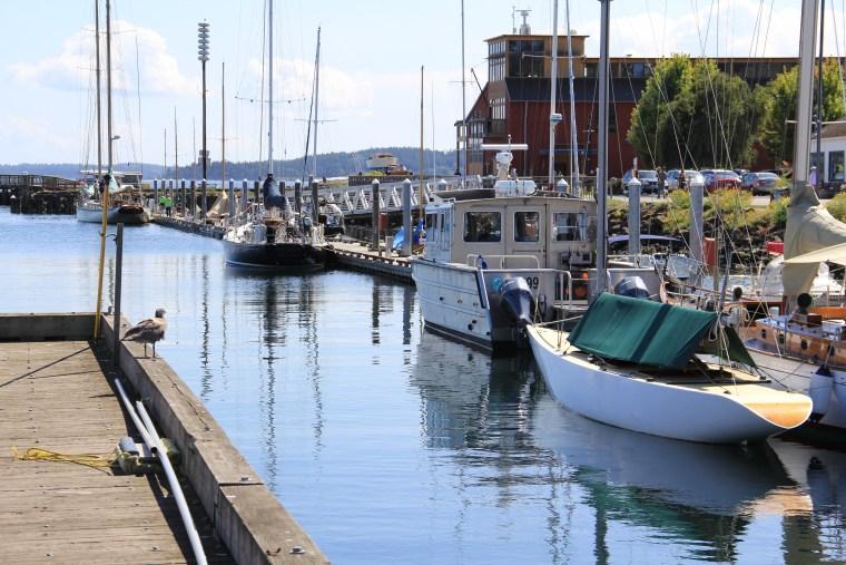 Port-Townsend-WA-harbor-bird