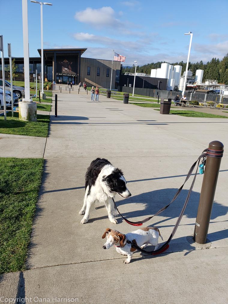 Dogs-at-Tillamook-Creamery-OR-35