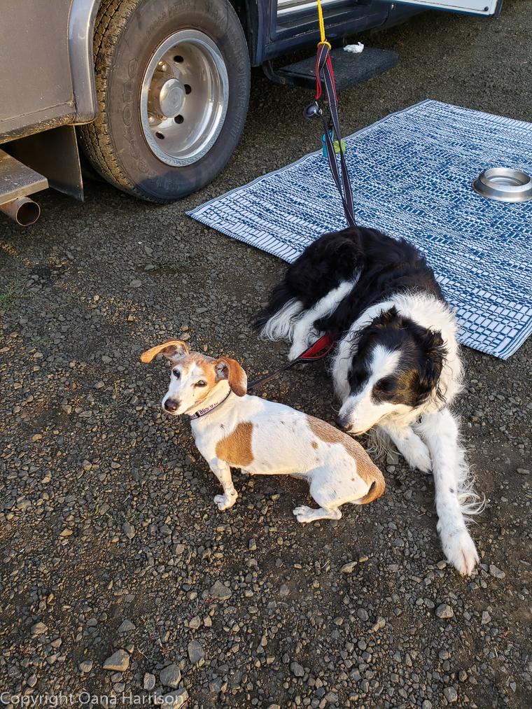 Eola Hills Legacy Winery Salem Oregon dogs
