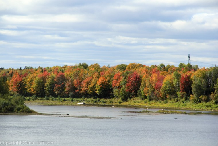 Fall Colors on the river Old Canada Road