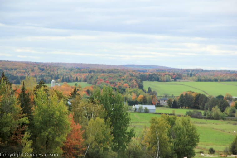 Fall Colors and farm land on Old Canada Road