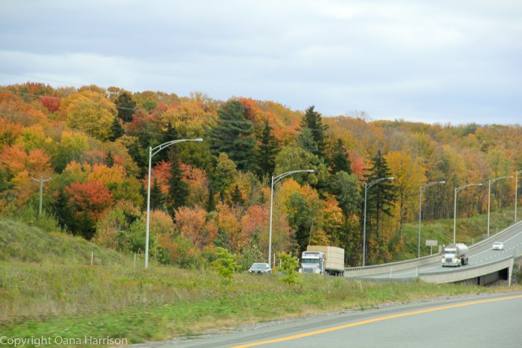 Trucks on road and fall colors on Old Canada Road