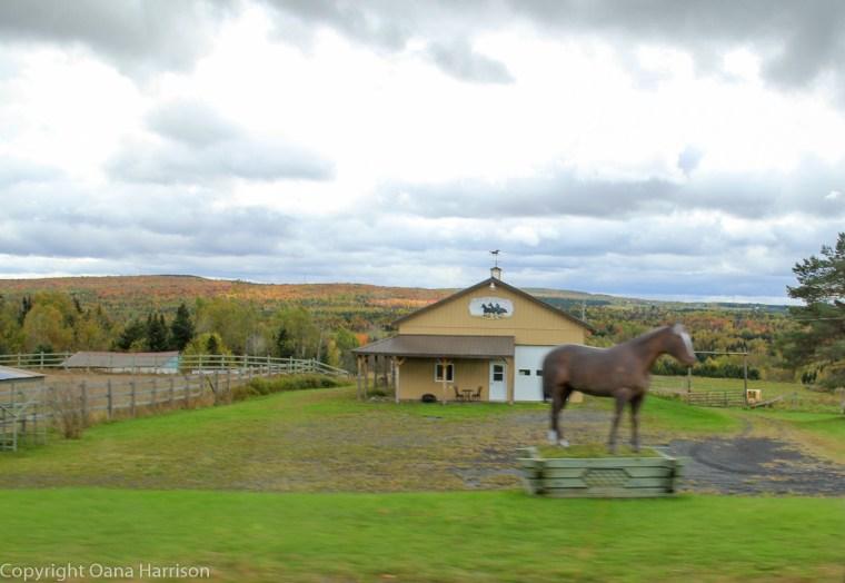 Old Canada Road fall colors horse farm