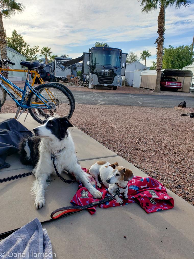 Las Colinas RV Park Eloy Arizona dogs