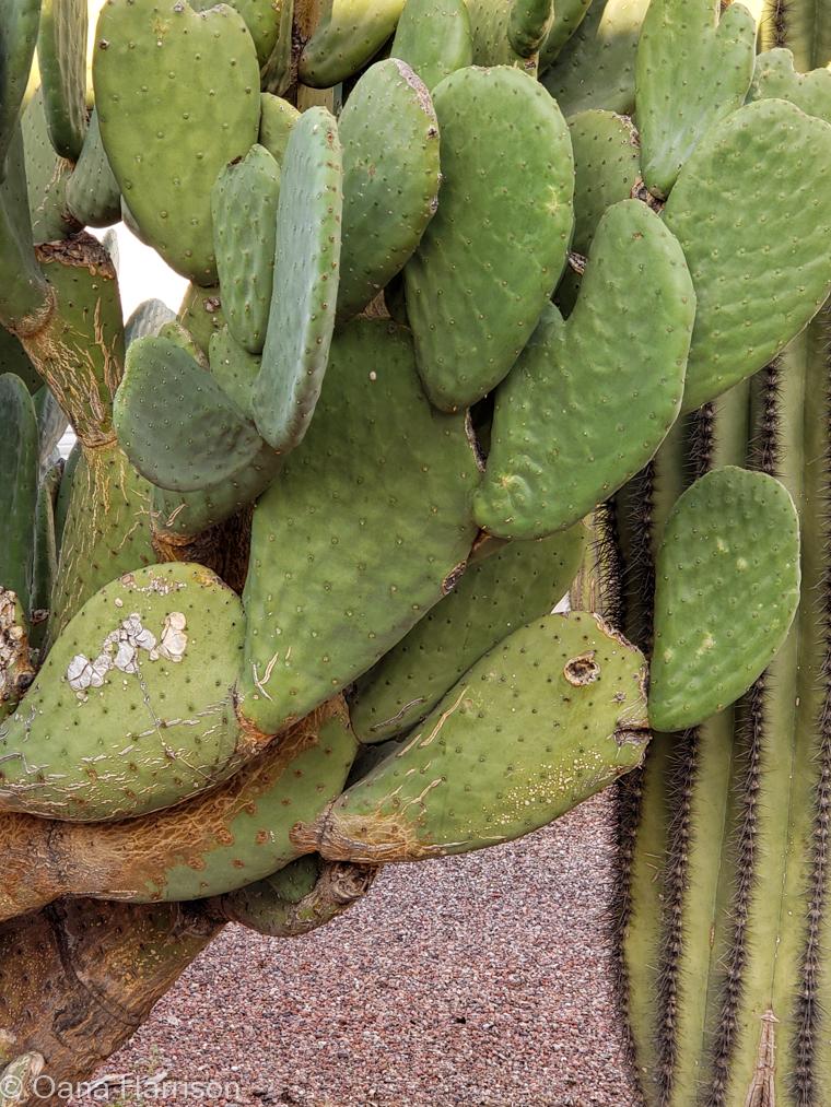 Las Colinas RV Park Eloy Arizona funny face cactus