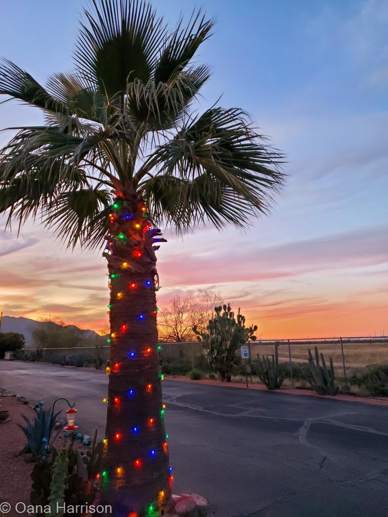Las Colinas RV Park Eloy Arizona palm tree with Christmas lights