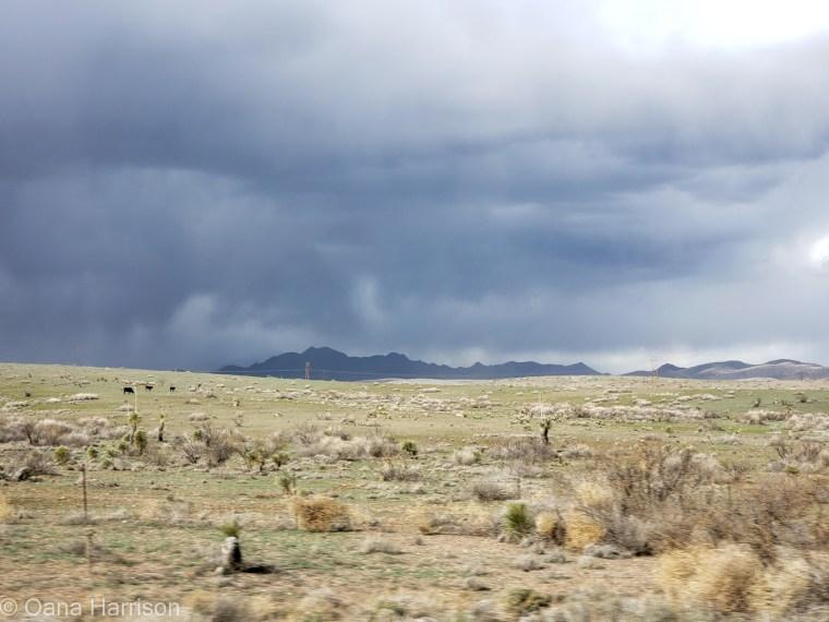 Stormy skies in Arizona