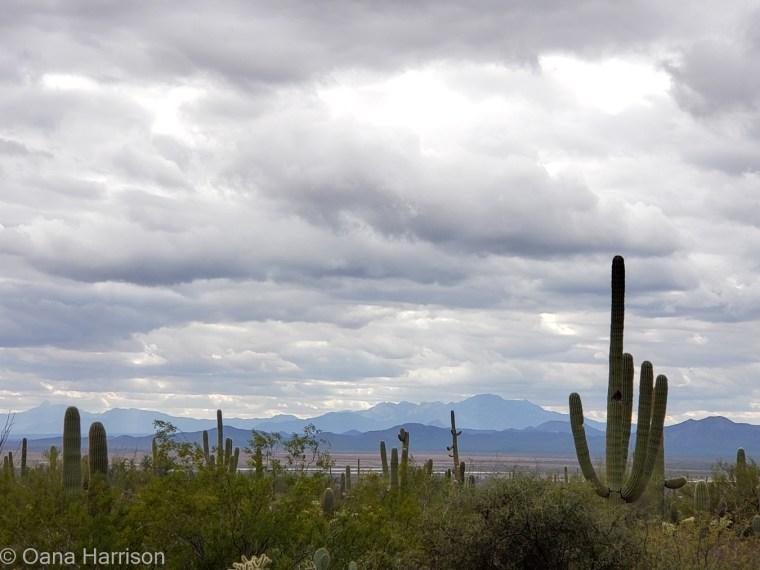 Saguaro West Tucson Arizona