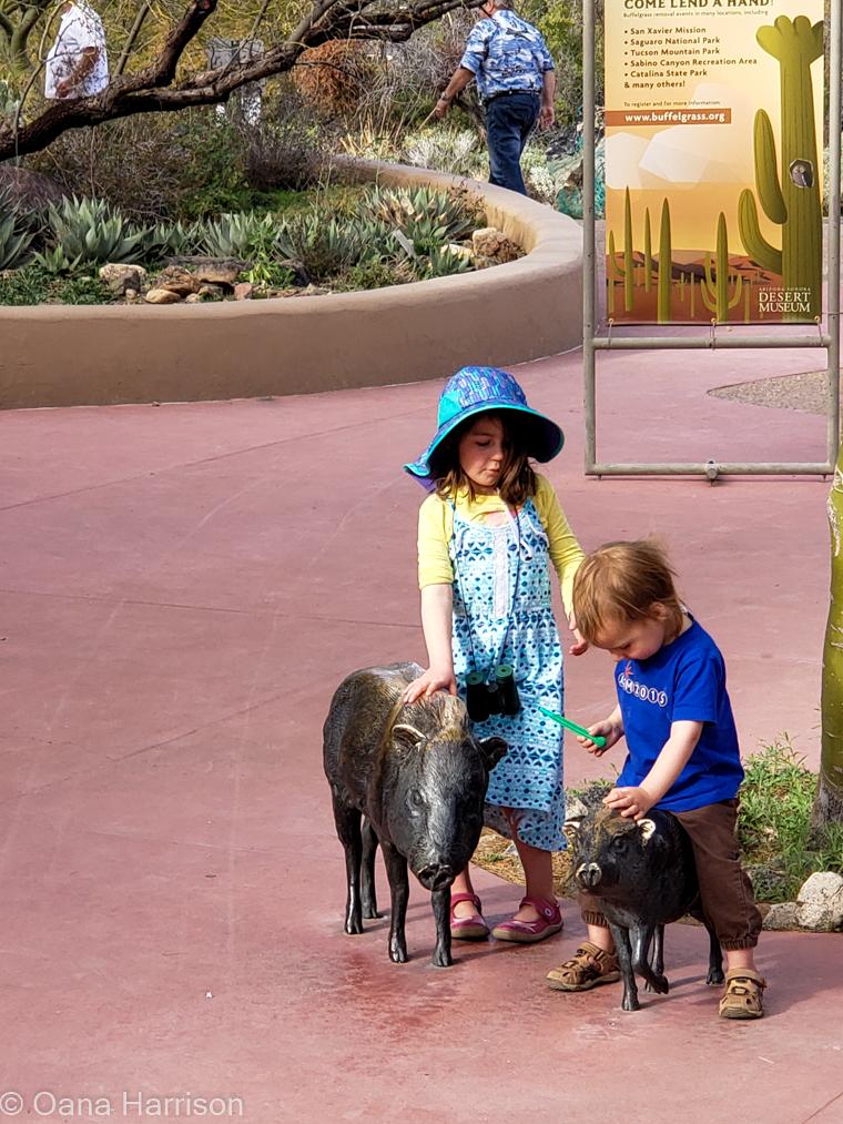 Saguaro West Arizona kids petting javelina statues