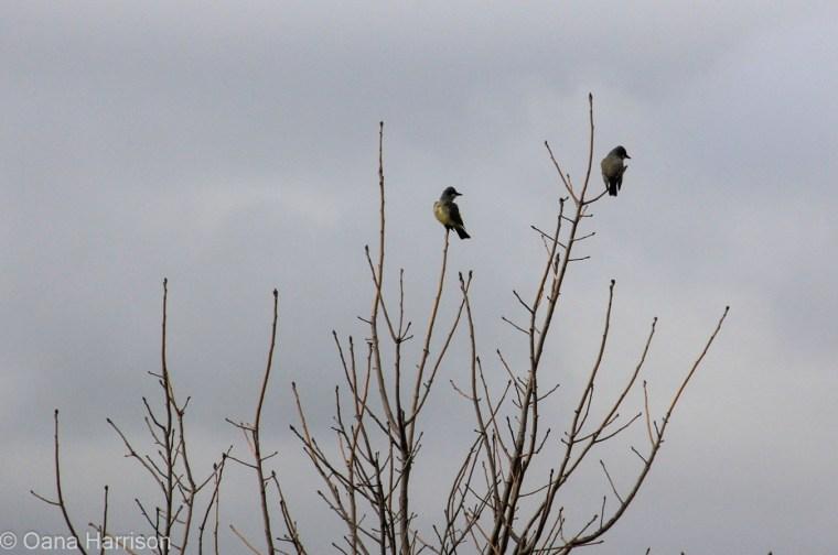 San Diego, California, birds