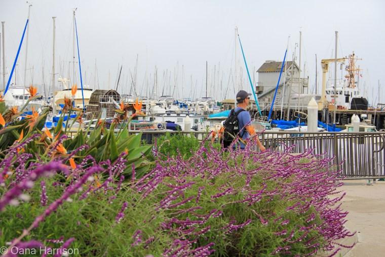 Santa Barbara, California, David at the marina