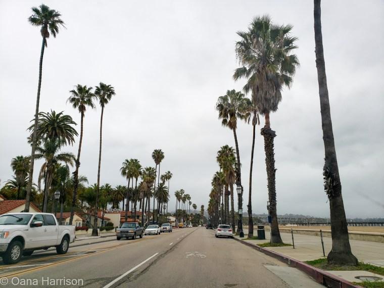 Santa Barbara, California, palm trees