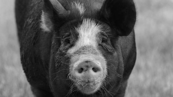 Lipstick On A Pig · Greatest Show in Cyberspace