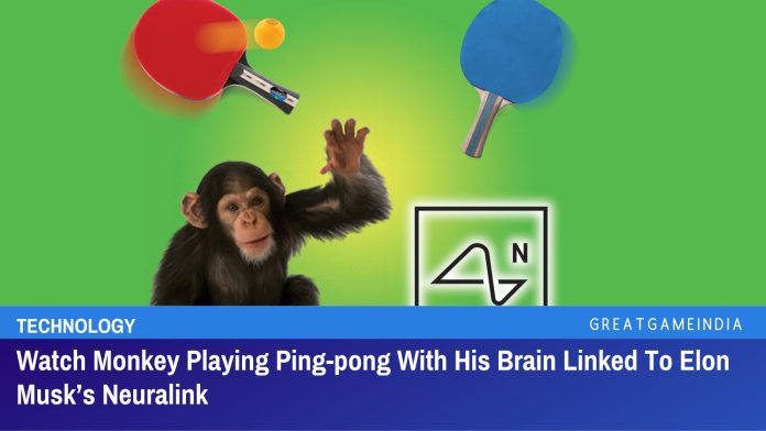 Watch Monkey Playing Ping-pong With His Brain Linked To Elon Musk's Neuralink