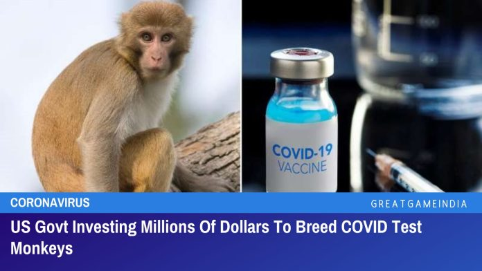 US Govt Investing Millions Of Dollars To Breed COVID Test Monkeys
