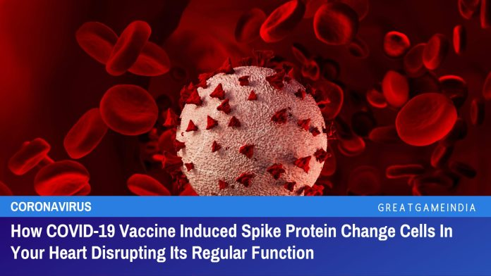 How COVID-19 Vaccine Induced Spike Protein Change Cells In Your Heart Disrupting Its Regular Function