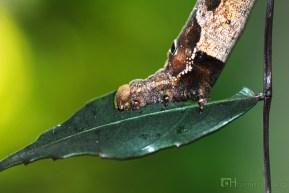 caterpillar14