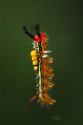 caterpillar8