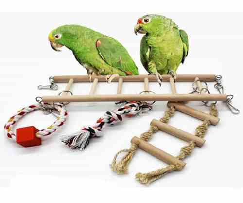 bird_toy_ladder
