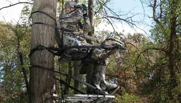 What is the Best Climbing Tree Stands