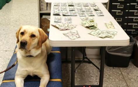 K9 and piles of cash seized by CBP at Dulles airport
