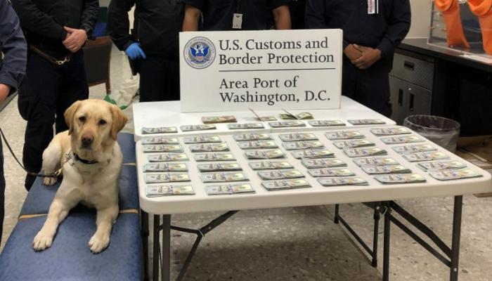 CBP canine Cato sits next to table full of seized money.