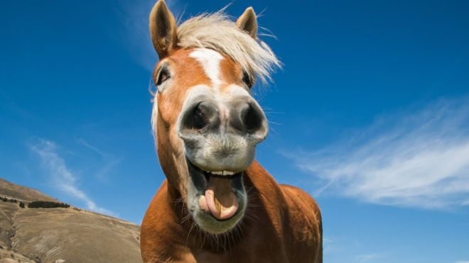 Study Shows That When They're Happy, Horses Make a Funny Sound