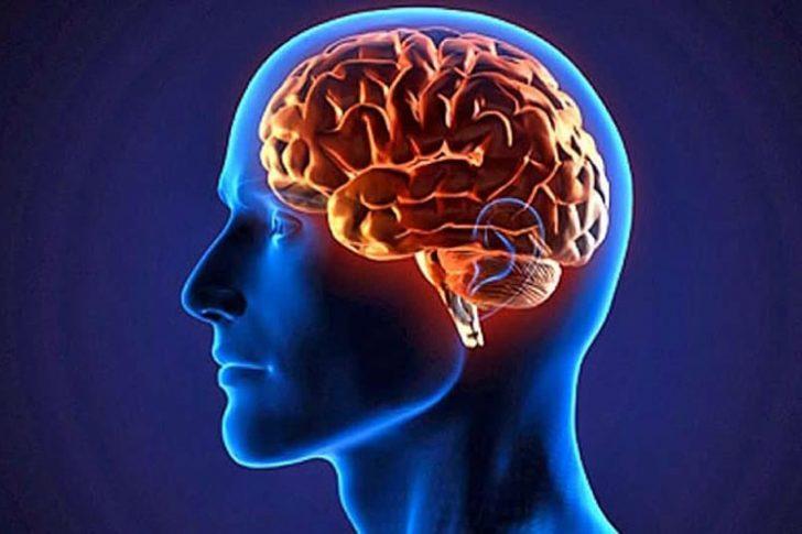 Greek-Australian scientist discovers new area of the brain