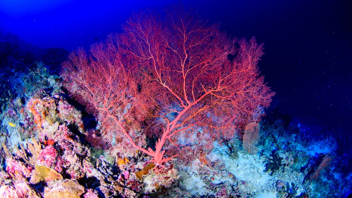Groundbreaking Coral Reef Recovery Method Accidentally Discovered By A Scientist