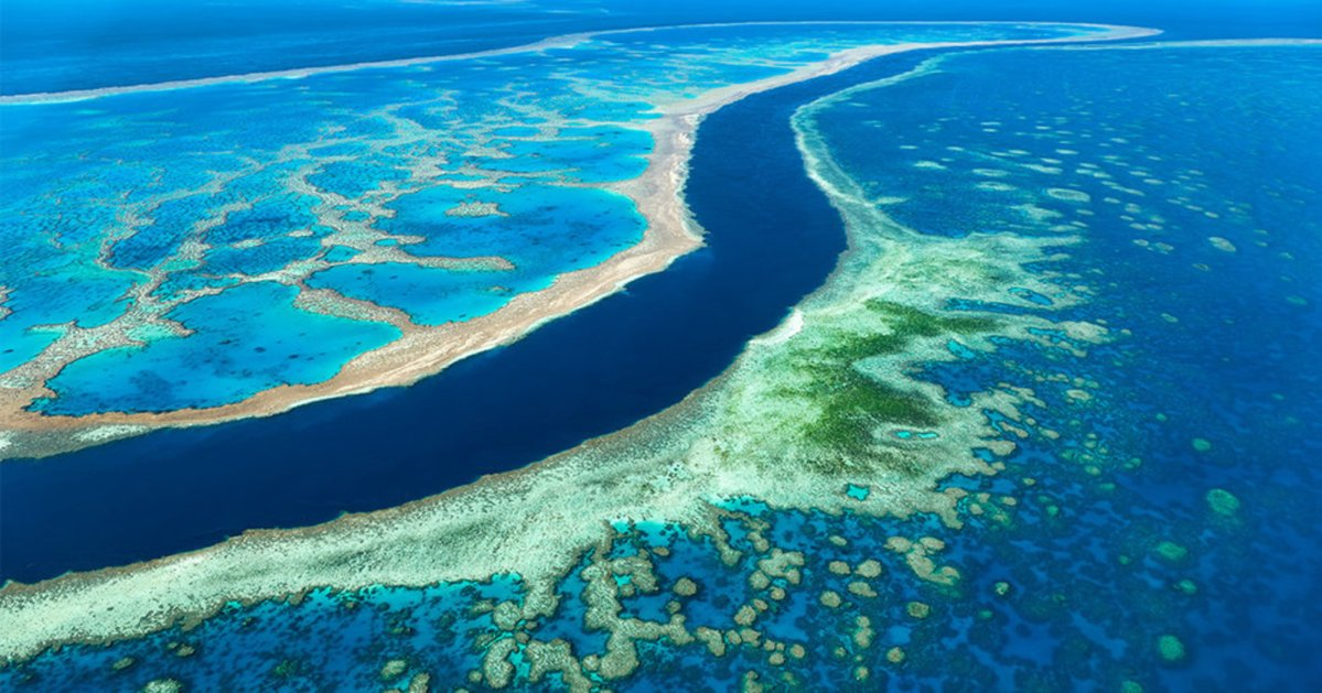 "Great Barrier Reef Is ""Migrating"" South Due To Ocean Warming"