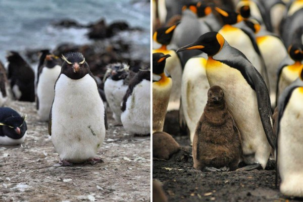 Where To See Penguins