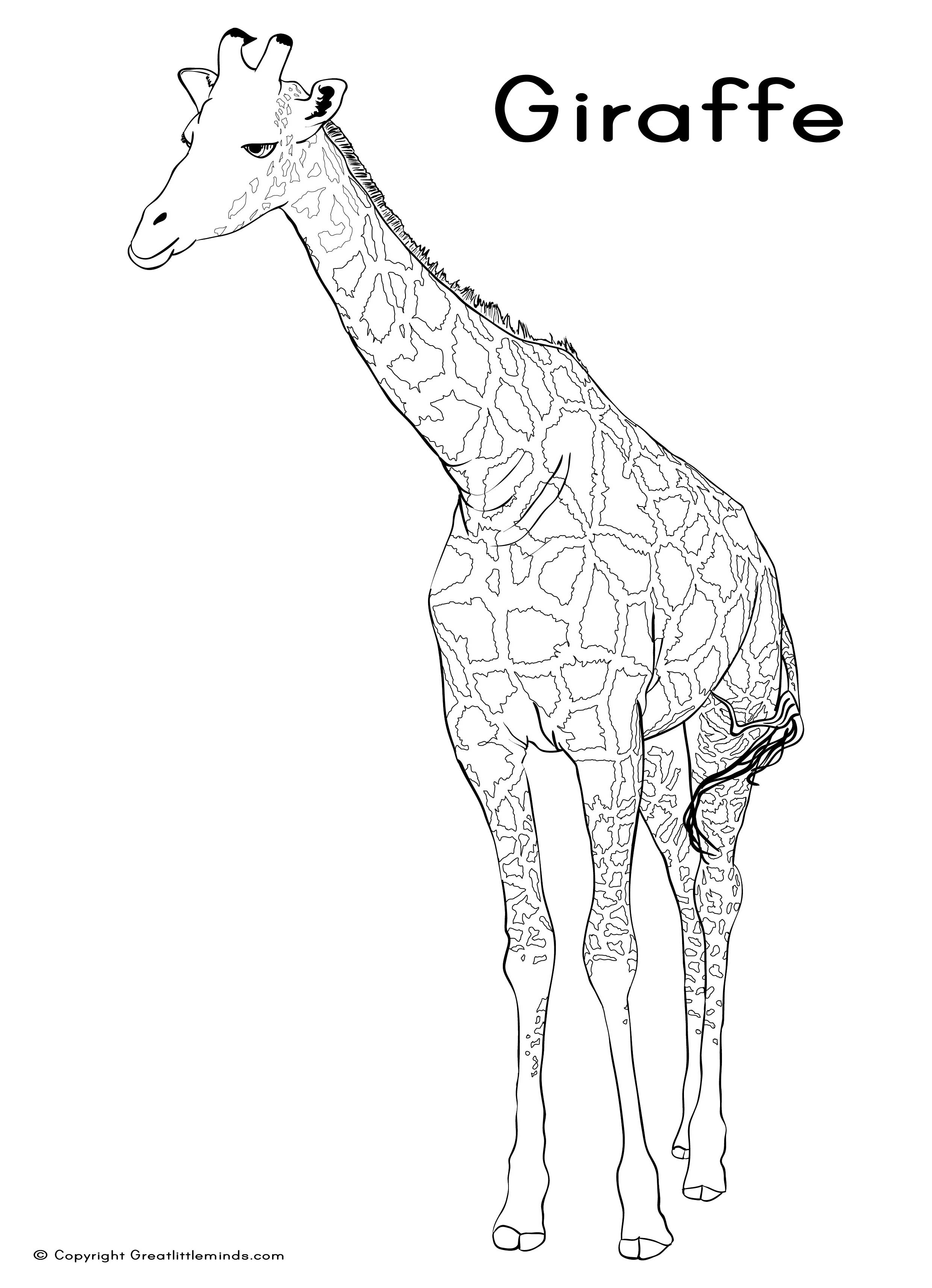 Giraffe Without Spots Coloring Page Coloring Pages