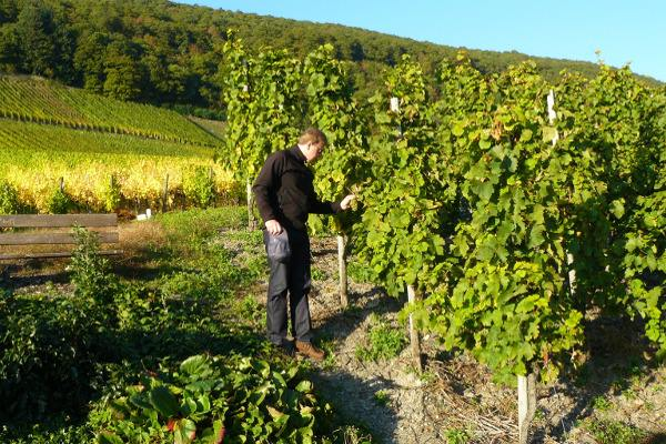 Bachelor of Viticulture (EIT) a man near vineyard-optimized