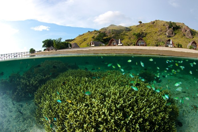 Komodo, beyond the dragons: diving and empty beaches in ...