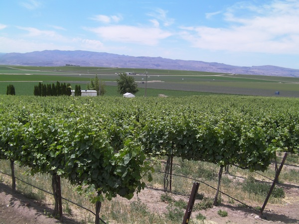 Idaho's high-elevation Pinot Gris produces awards, fans