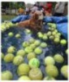 Tennis Ball Bonanza 2011