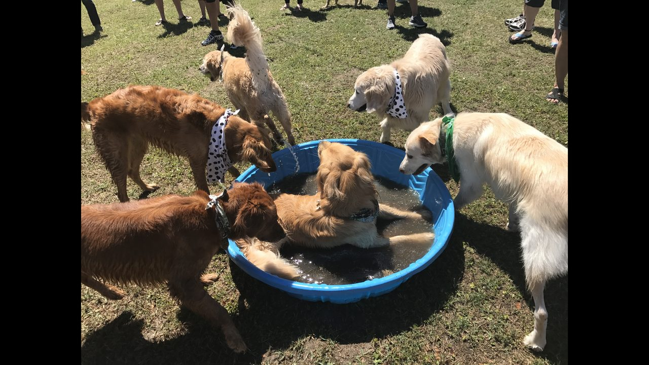 Goldenfest 2017 Great Rescue
