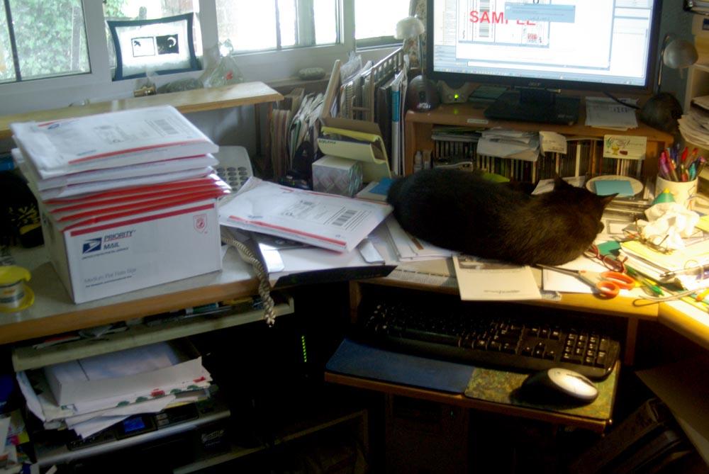 black cat sleeping on desk