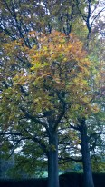 Autumn has arrived.
