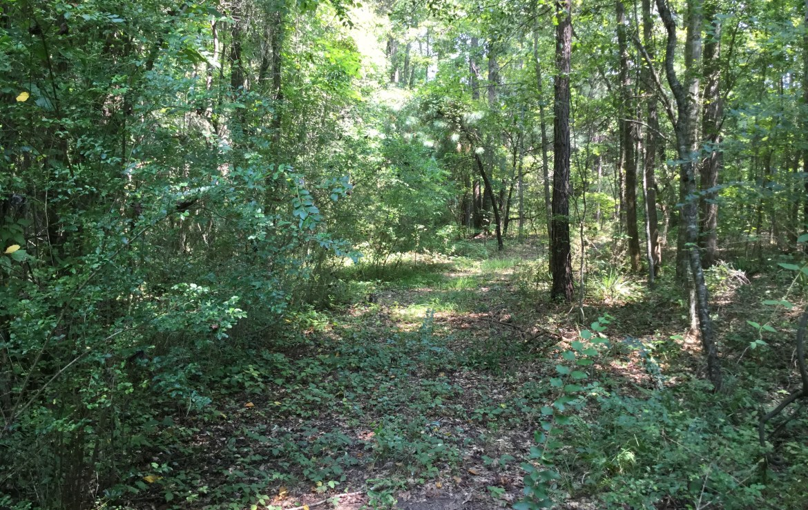Frazier Tract land for sale in Alabama