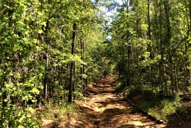 Town Creek hunting land for sale in Alabama