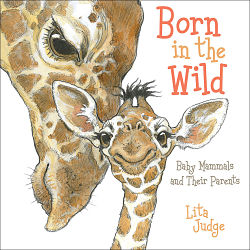 Born in the Wild by Lita Judge