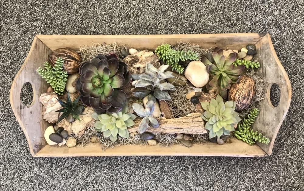 "Succulent garden in wood tray $59 - 27"" x 12"""