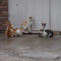 カストラキの猫ちゃんたち