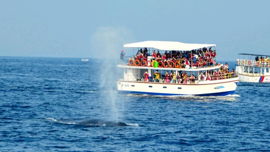 A boat doing whale watching in Mirissa, Sri Lanka