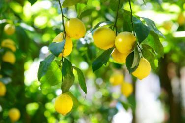 Keto Lemon